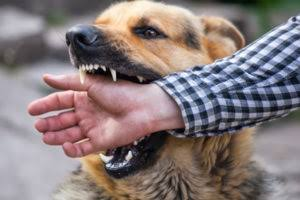 What Compensation Should You Receive For Dog Bite Injury Cases?